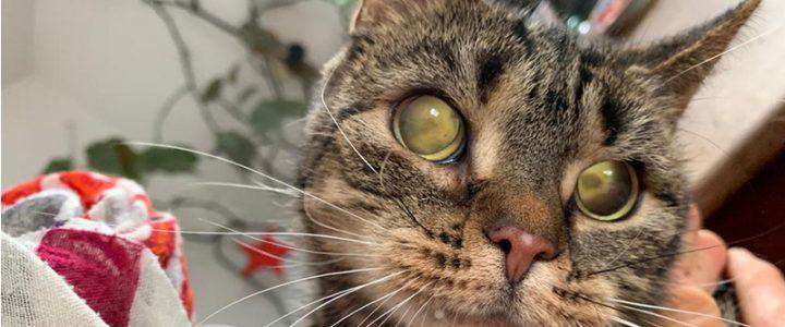 Wie uns ein blindes Kätzchen die Augen öffnet